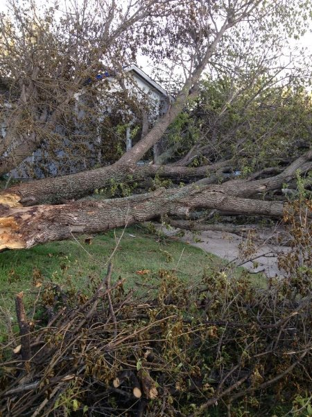 Fallen down tree in driveway