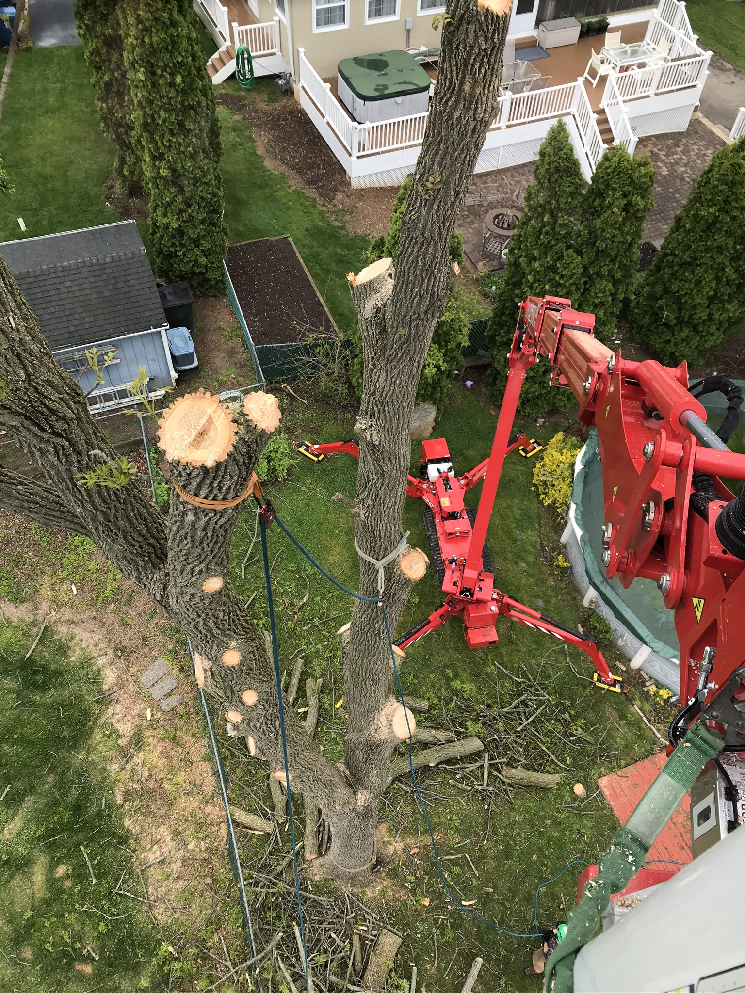 Tree Removal in Fort Worth, TX - A Matt Tree Service